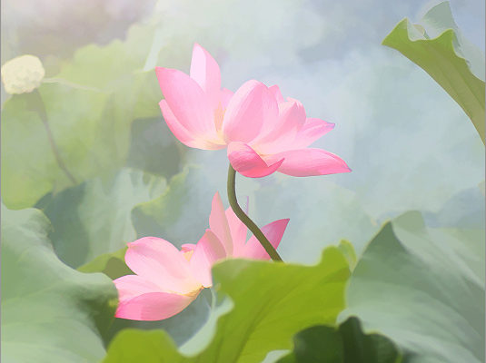 No Mud, No Lotus: Growing into our fullness